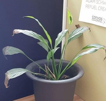 Gary the pot plant.1